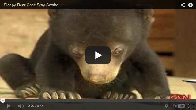 Cute Baby Black Bears | Cuteness Overflow