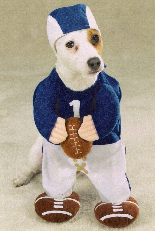 Dog Quarterback