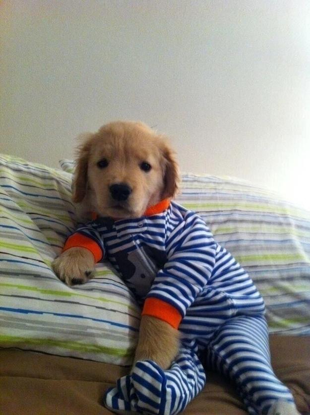 Puppy Onesie