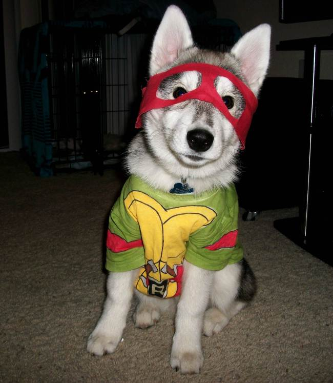 Dogs Dressed Up