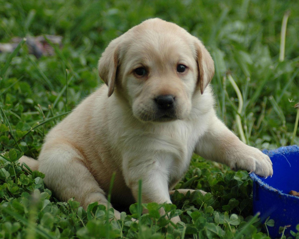 28914_Cute-Puppy-Black-Toast-Productions_2360x1884