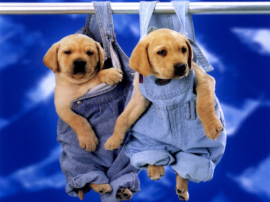 30-cute-puppies-you-will-want-to-take-home-with-you-12