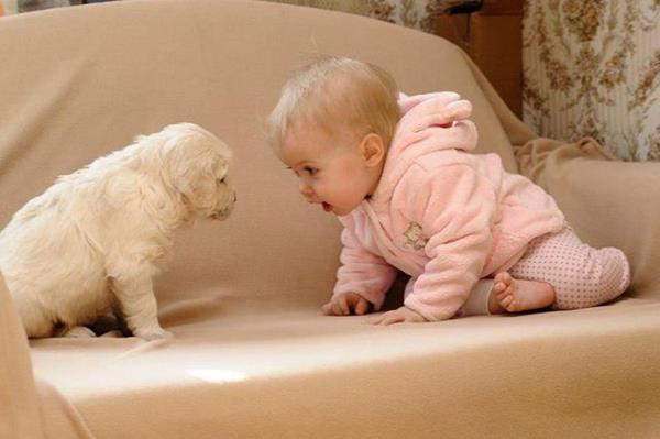Dogs and Babies | Cuteness Overflow