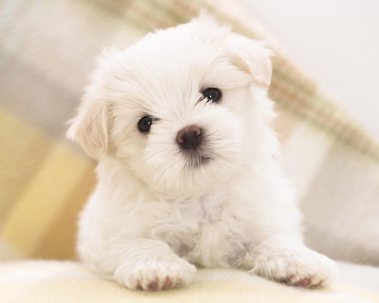 Cute-Wallpaper-teddybear64-20682571-1280-1024