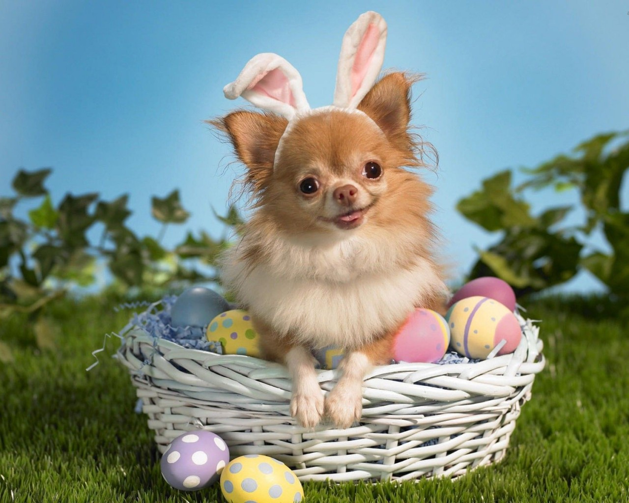 Cute-puppy-basket-egg-1024x1280