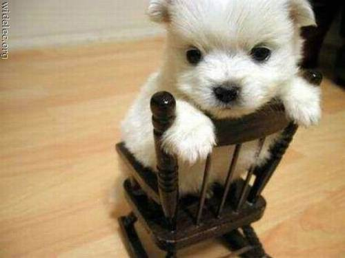 Awesomely Cute!