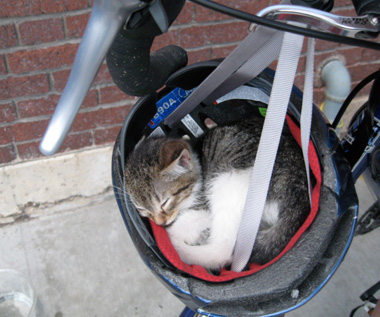 cat-sleeping-in-bike-helmet