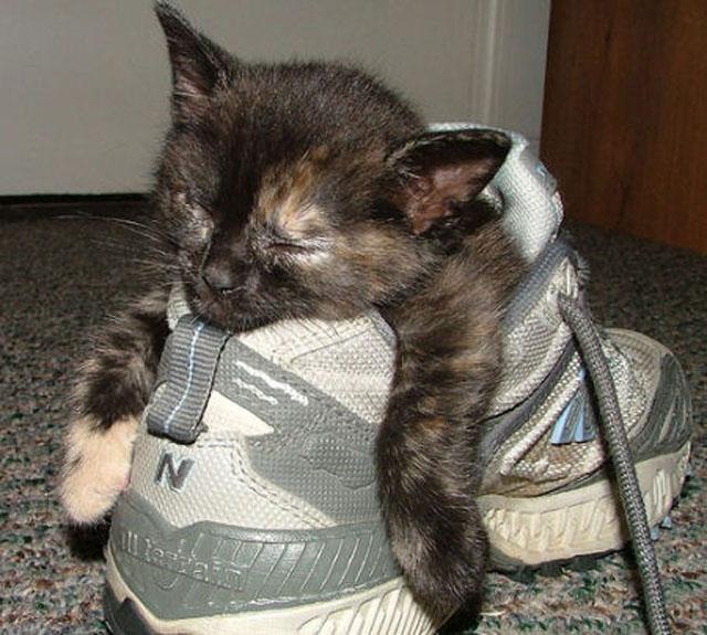 cats-sleeping-weird-places-shoe