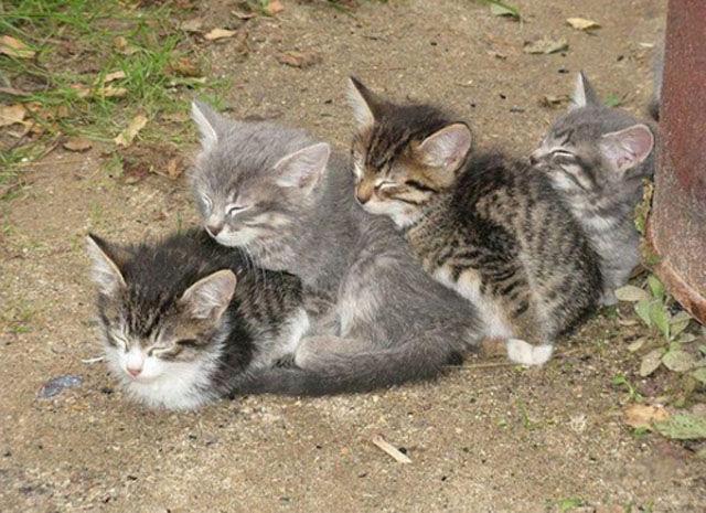 cats_sleeping_in_weird_ways_640_09