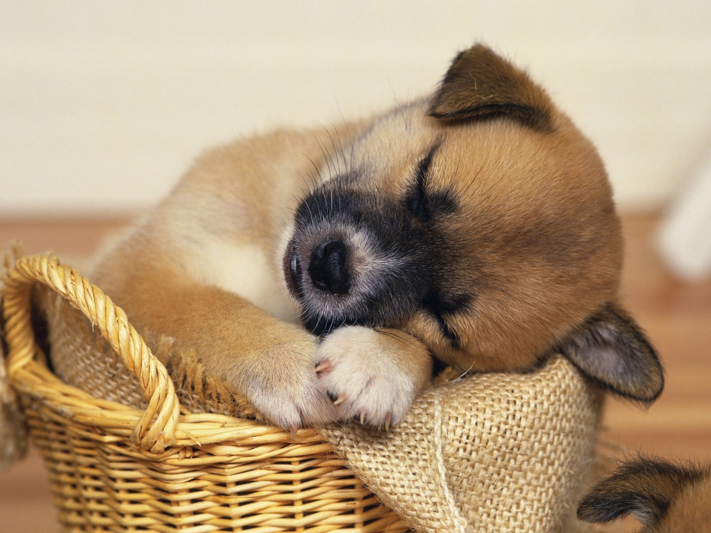 cute-dog-pictures1
