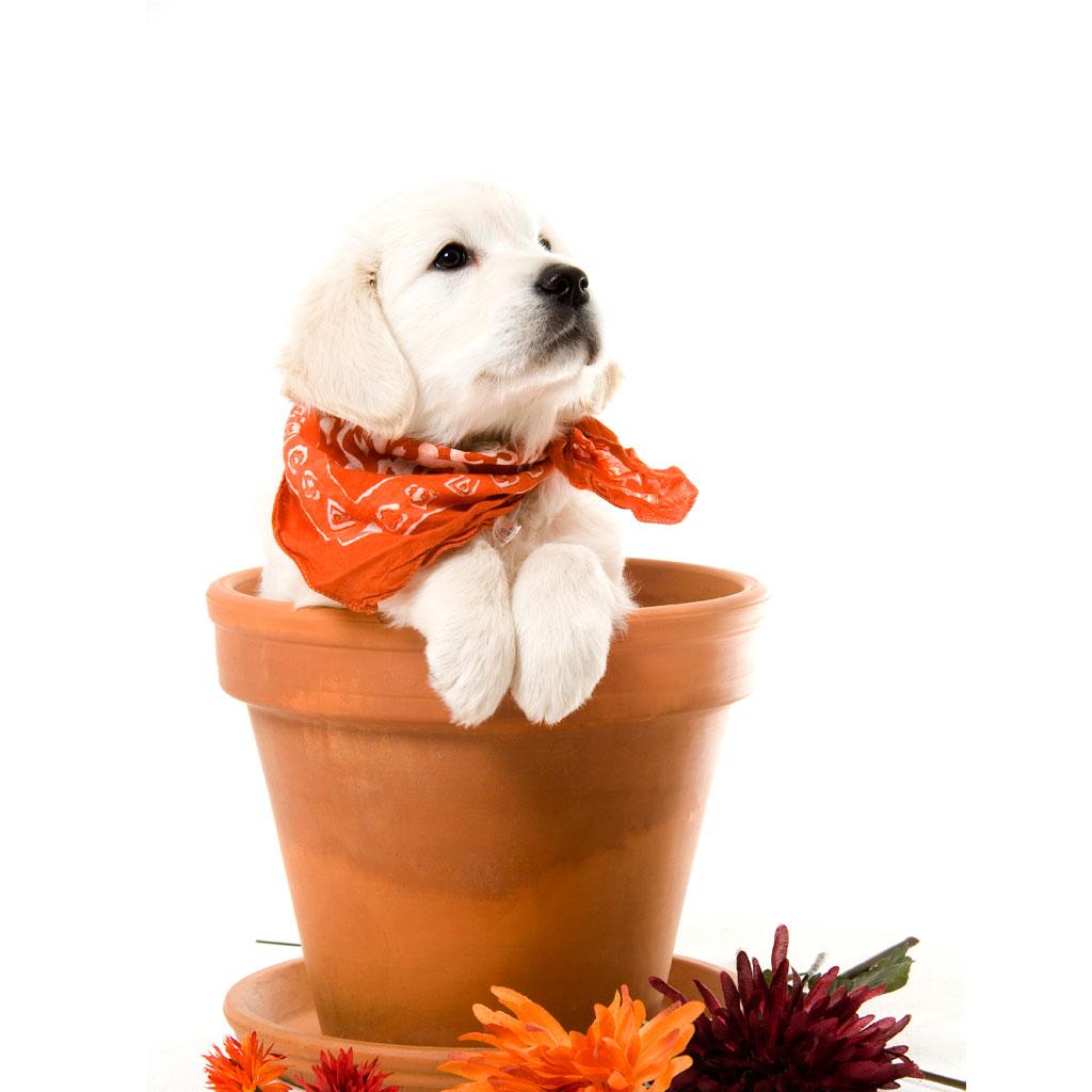cute-puppy-ipa3d-wallpaper
