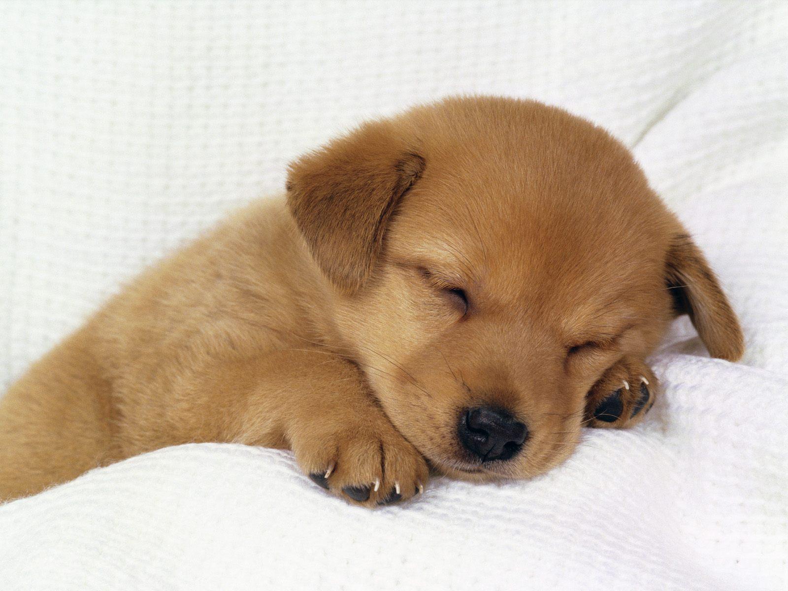 cute_puppy-5312