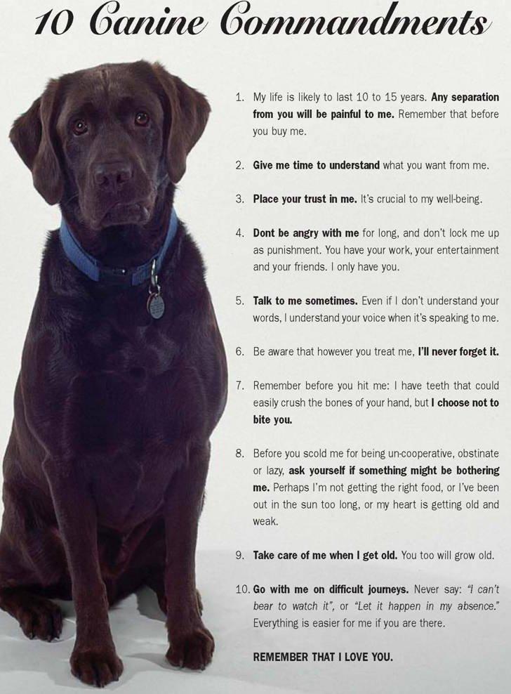 dog-commandments