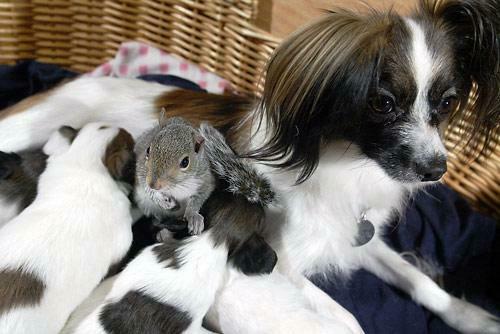 Finnegan the Squirrel