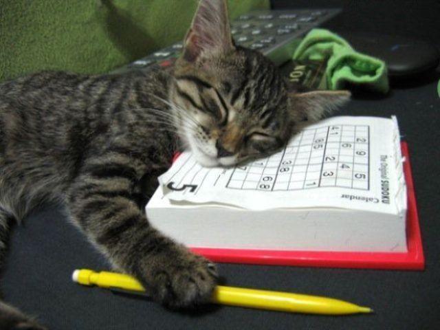 funny_sleeping_animals_640_12