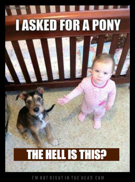 Not a Pony