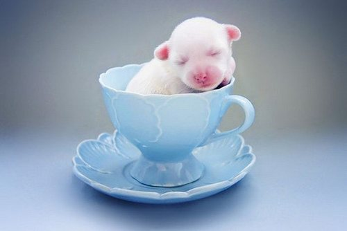 Cuteness In A Cup Better Than Coffee Cuteness Overflow
