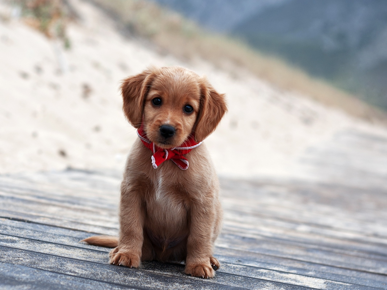 Cute and Adorable Pupp...