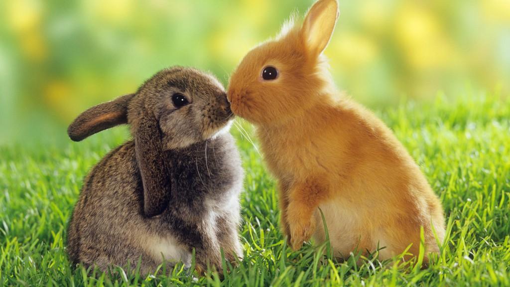 8775268-cute-animals-wallpaper
