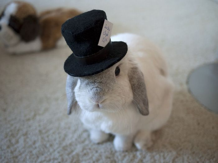 Animals-with-hats26