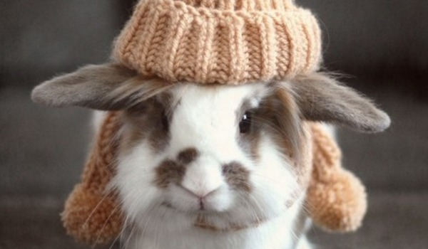 animals-in-hats-rabbit-tumblr-2