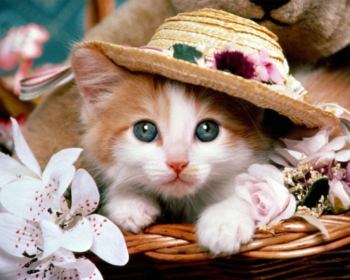 animals-tiny-hats-6