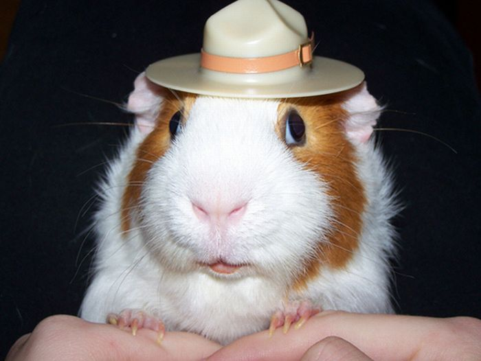 animals-with-hats-part2-35