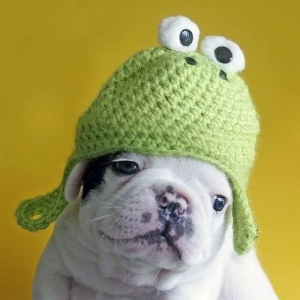 animals-with-hats-part2-59