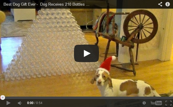 dog-christmas-bottles