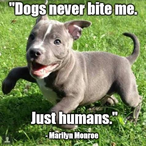 dogs-never-bite-me