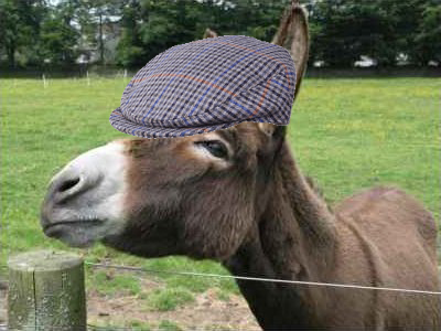 donkey wearing a hat 2