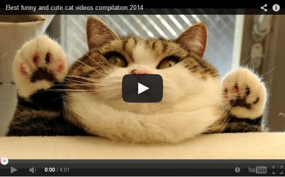Awesome and Funny Jumping Cats Funny Videos Cats