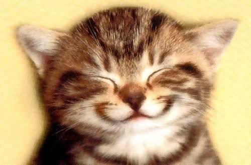 kitten_smile-1611