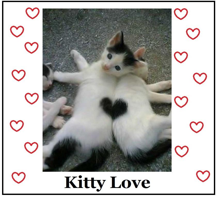 kitty-love