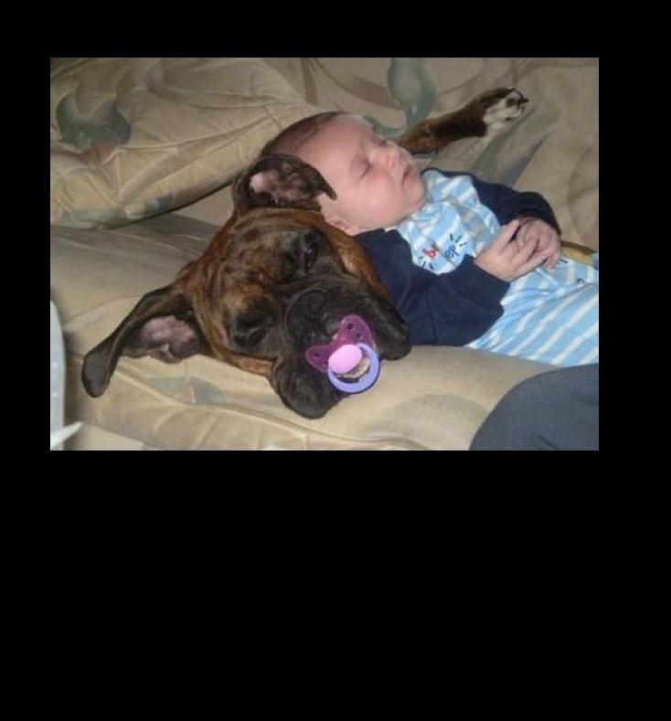 pacifierdogbaby