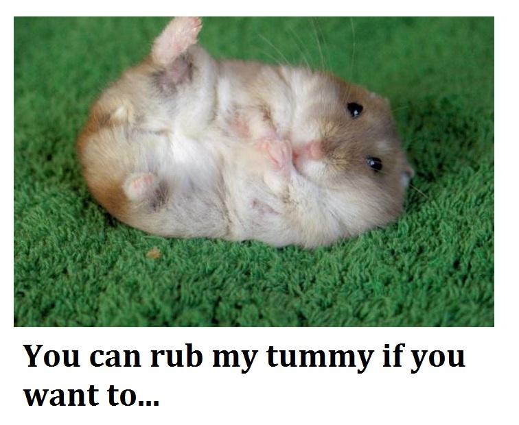 tummy rub