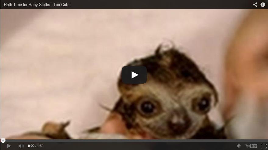 wet baby sloth