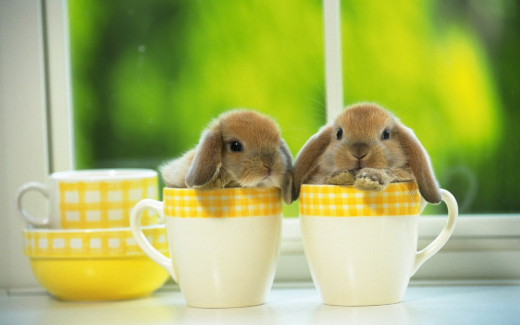 Cute-Baby-Bunnies-Wallpaper2