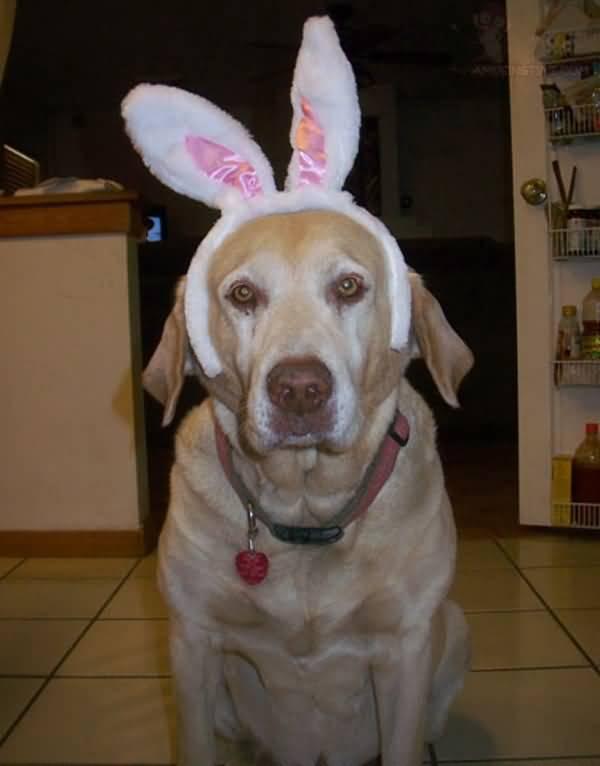 amusing-dog-with-bunny-ears