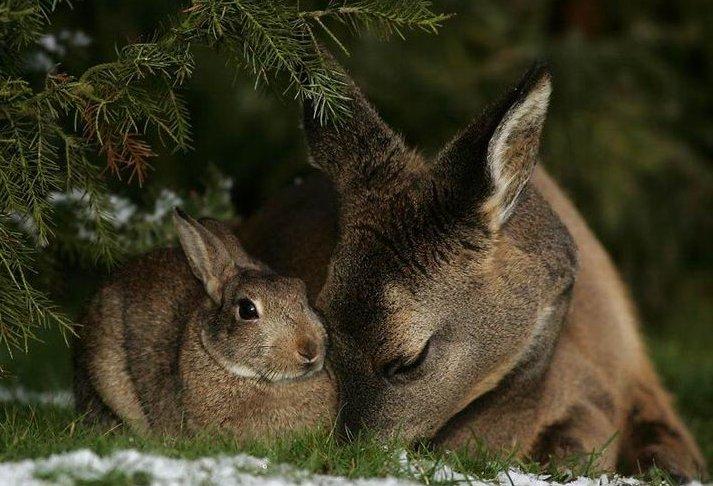 bambi-thumper (1)