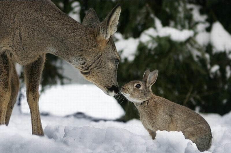 bambi-thumper (10)