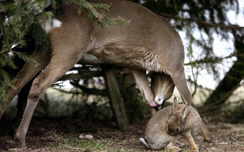 bambi-thumper (11)