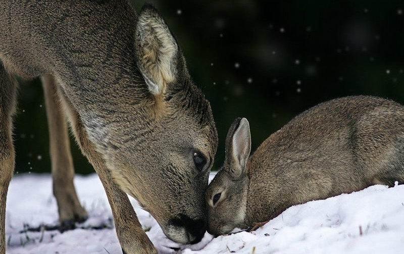 bambi-thumper (2)