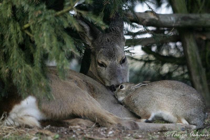 bambi-thumper (3)