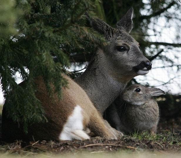 bambi-thumper (4)