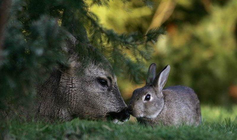 bambi-thumper (5)