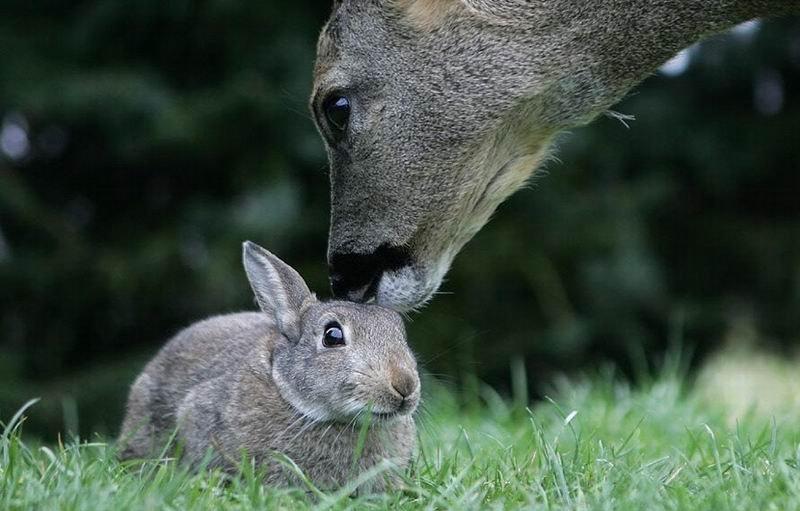 bambi-thumper (6)