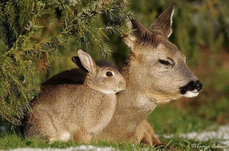 bambi-thumper (7)