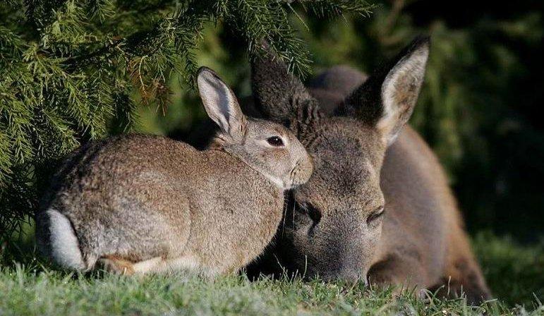 bambi-thumper (8)
