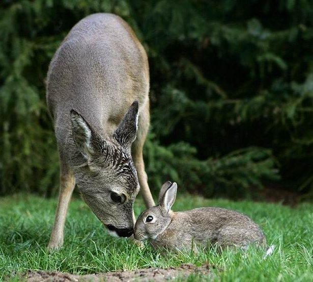 bambi-thumper (9)